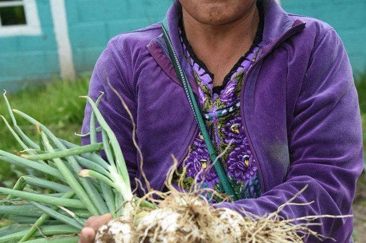 Nutricion Guatemala